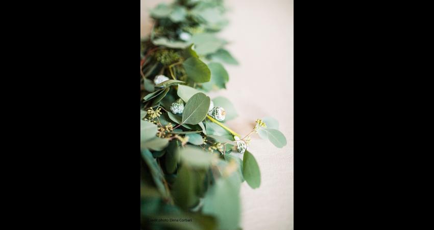 sfumature-cipria-pianta.jpg